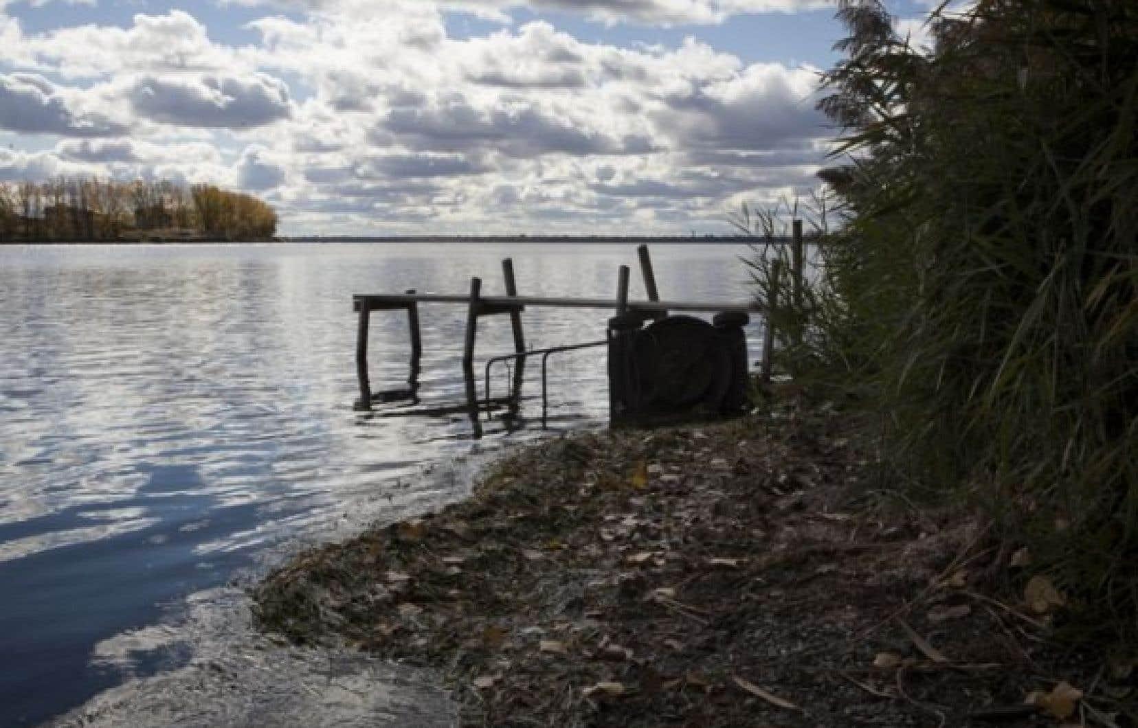 Les médicaments continuent de s'accumuler dans le Saint-Laurent et d'en affecter la faune.