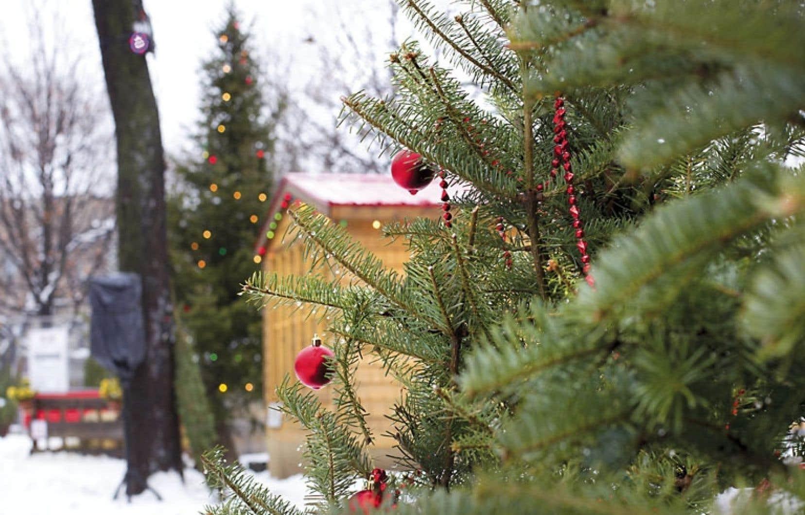 Si au Québec, c'est le vrai roi des forêts, le sapin baumier, que les producteurs nous offrent le plus souvent, en Europe, l'arbre de Noël est habituellement une épinette de Norvège, aussi appelée épicéa, car le sapin y a disparu lors de la dernière glaciation.