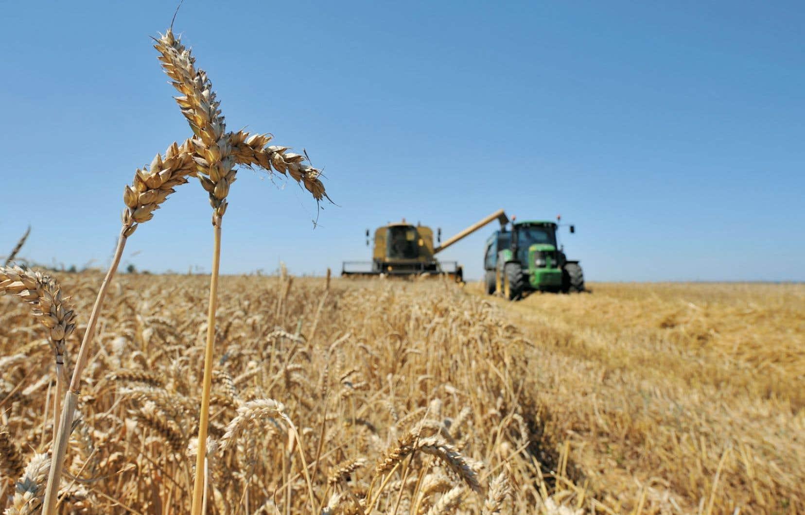 Les mauvaises conditions climatiques de 2012 pour la culture céréalière vont sans doute se traduire par une hausse du prix des pâtes alimentaires, farines, pains et céréales en boîte.
