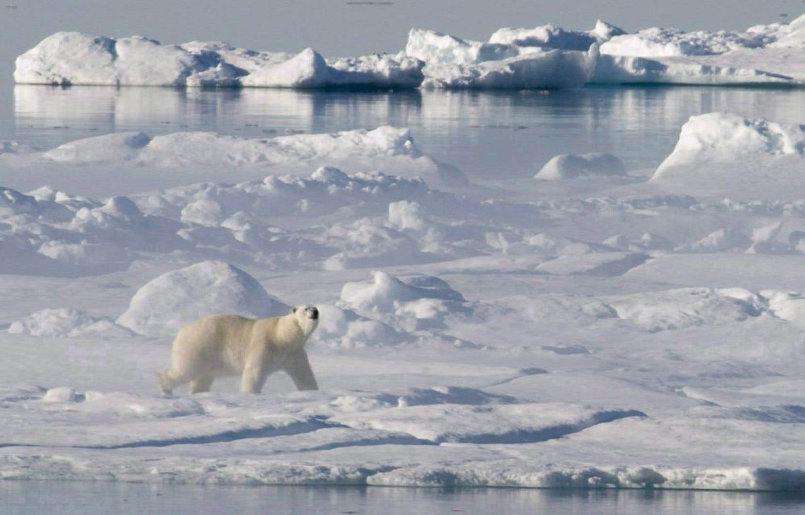 L'Arctique est de plus en plus fragilisée. Des scientifiques ont tiré récemment la sonnette d'alarme sur l'acidification «rapide» de l'océan Arctique due aux émissions de CO2, un phénomène lourd de menaces pour le fragile écosystème de la région.