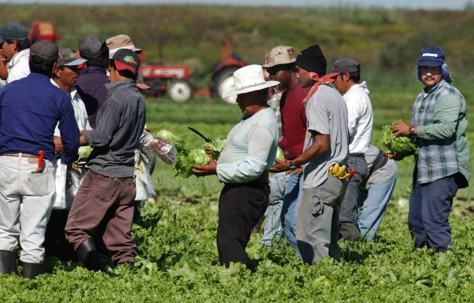 Des travailleurs saisonniers du Mexique sur une ferme de Montérégie