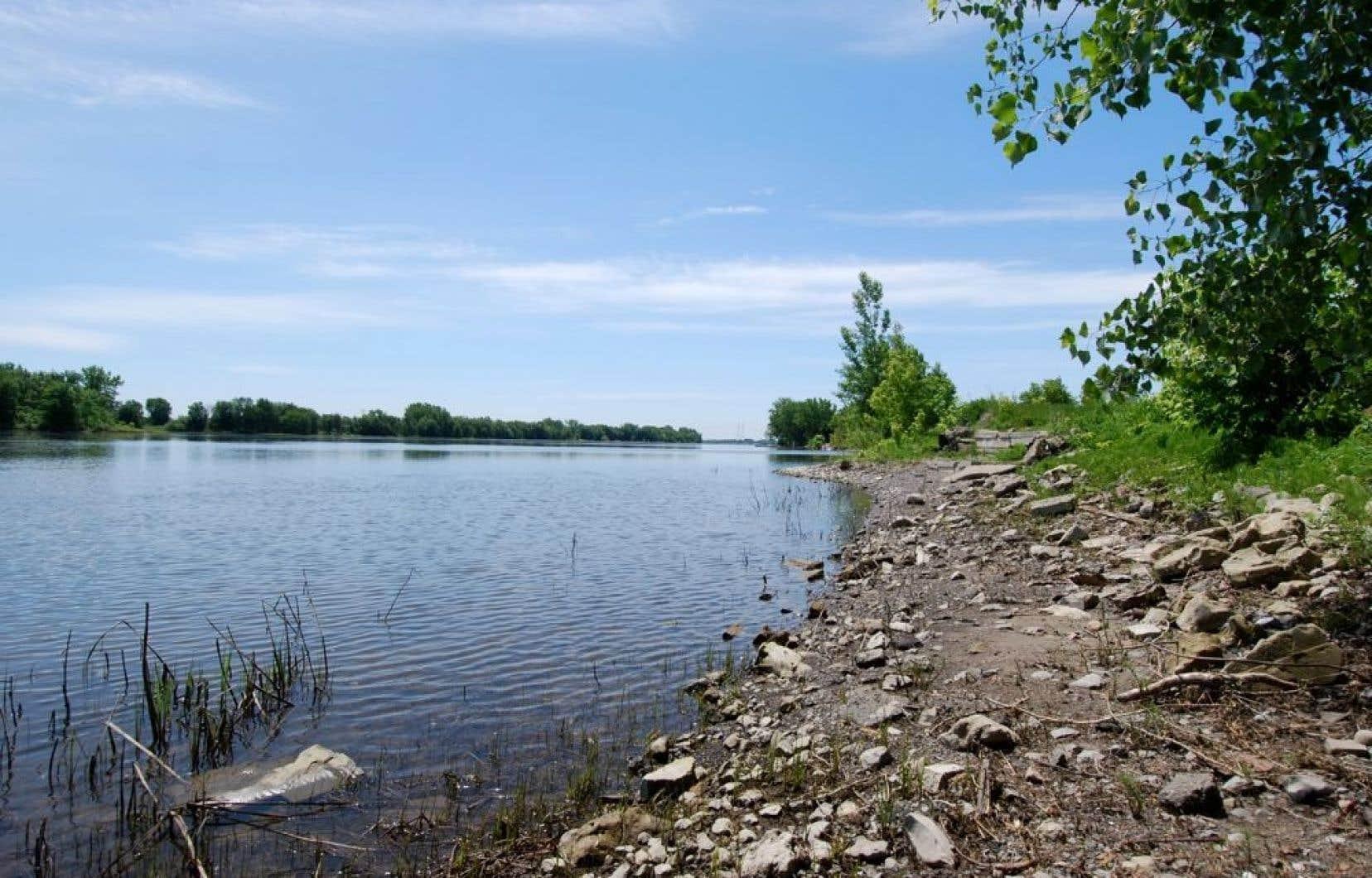Pointe-aux-Trembles est depuis longtemps un petit coin de fraîcheur et de baignade pour la population locale.