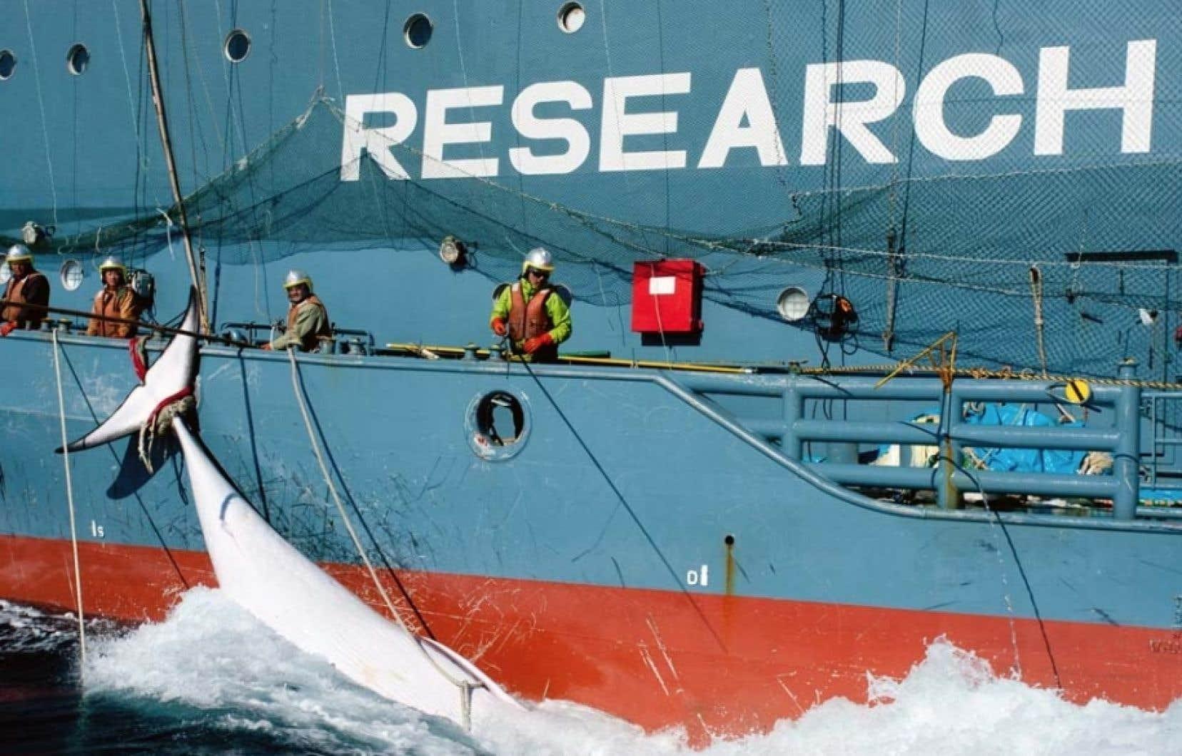 Chasse à la baleine par un bateau japonais.