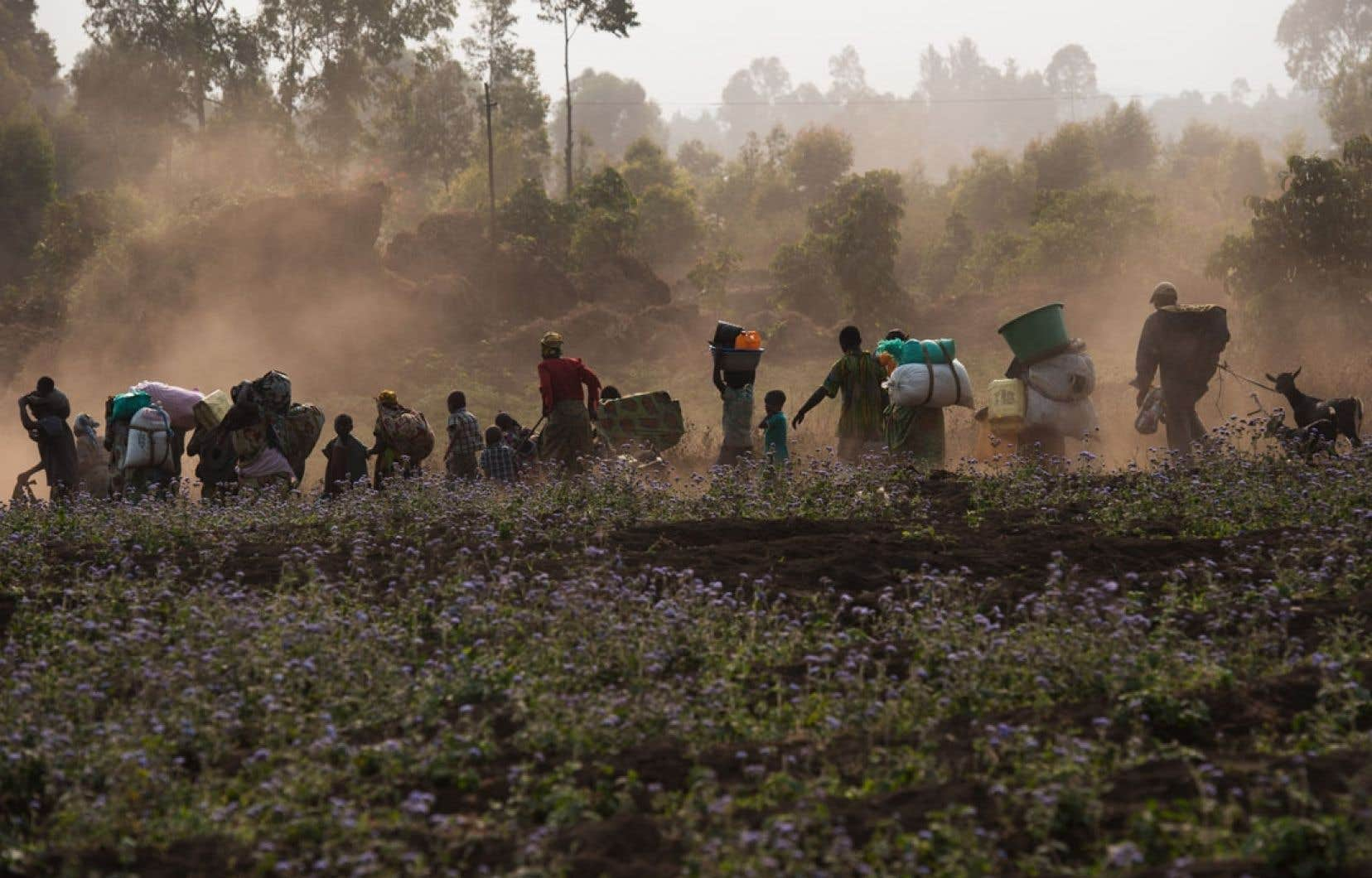 65 000 Congolais ont cherché refuge en Ouganda, selon la Croix-Rouge ougandaise.