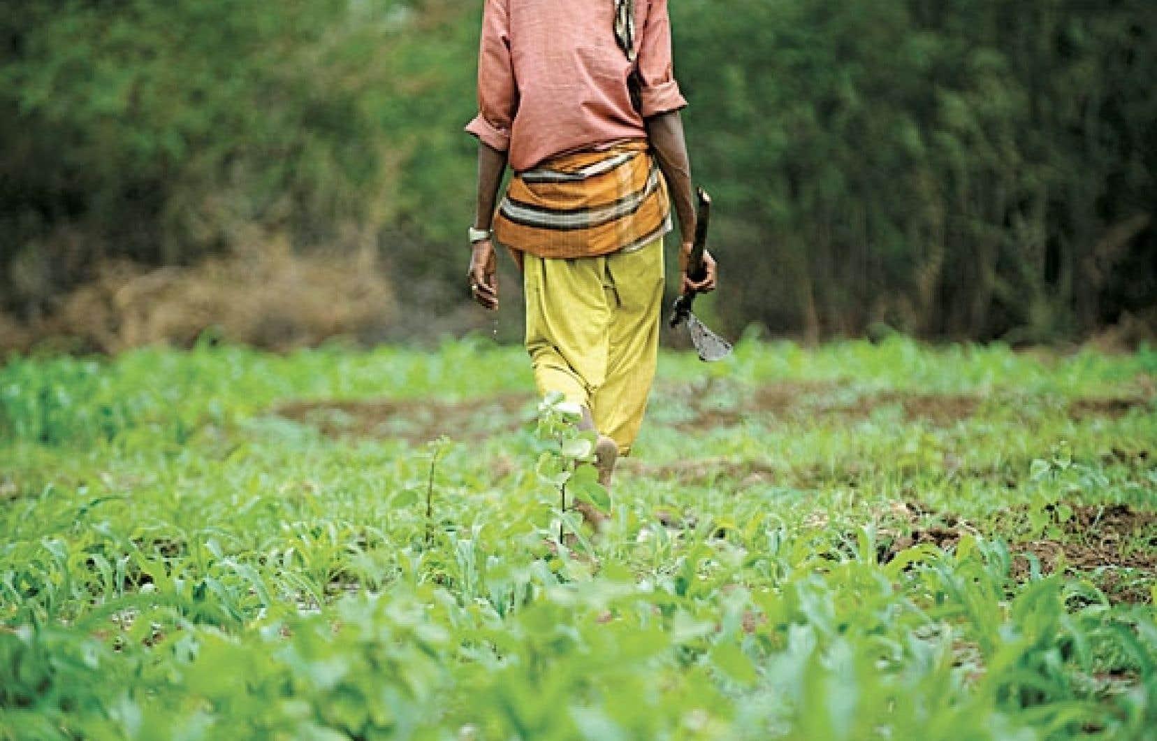L'Afrique verra à terme sa production agricole totale reculer de 10 % d'ici à 2050, selon la Banque mondiale.