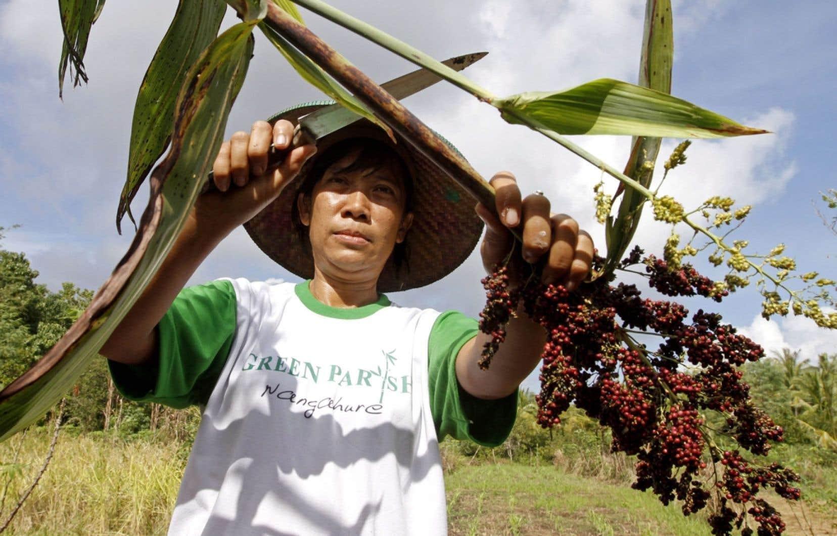 Une voie de sortie est possible pour devenir « Maître chez soi ». La preuve en est fournie en Indonésie, dans l'île de Florès, par le programme Otonomi (autonomie).