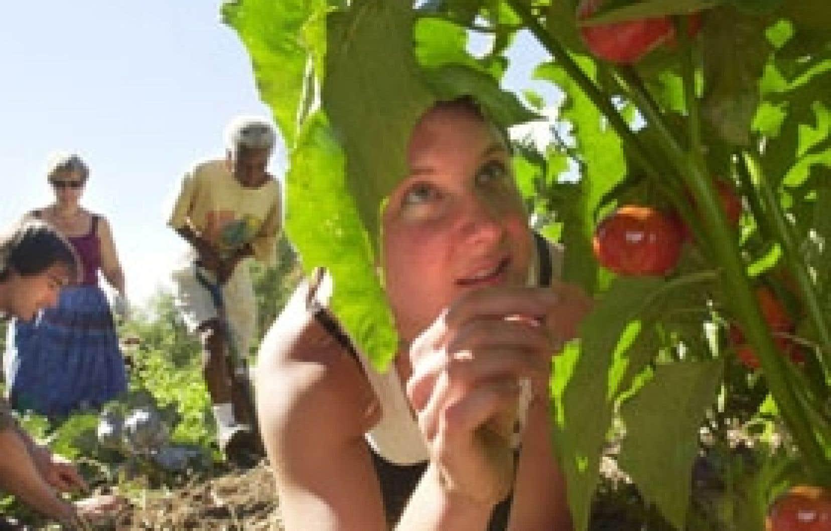 Quelques centaines de jardiniers devront troquer les belles tomates rouges pour des fleurs.