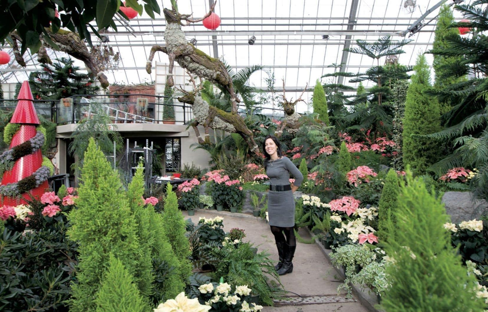 Les visiteurs de Noël s'expose avec panache, au Jardin botanique de Montréal, pourront déambuler dans une végétation luxuriante où les poinsettias côtoient les conifères.