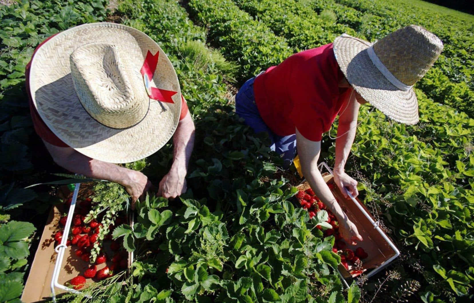 Les cueilleurs de petits fruits n'auront toujours pas droit au salaire minimum lors de la prochaine récolte.