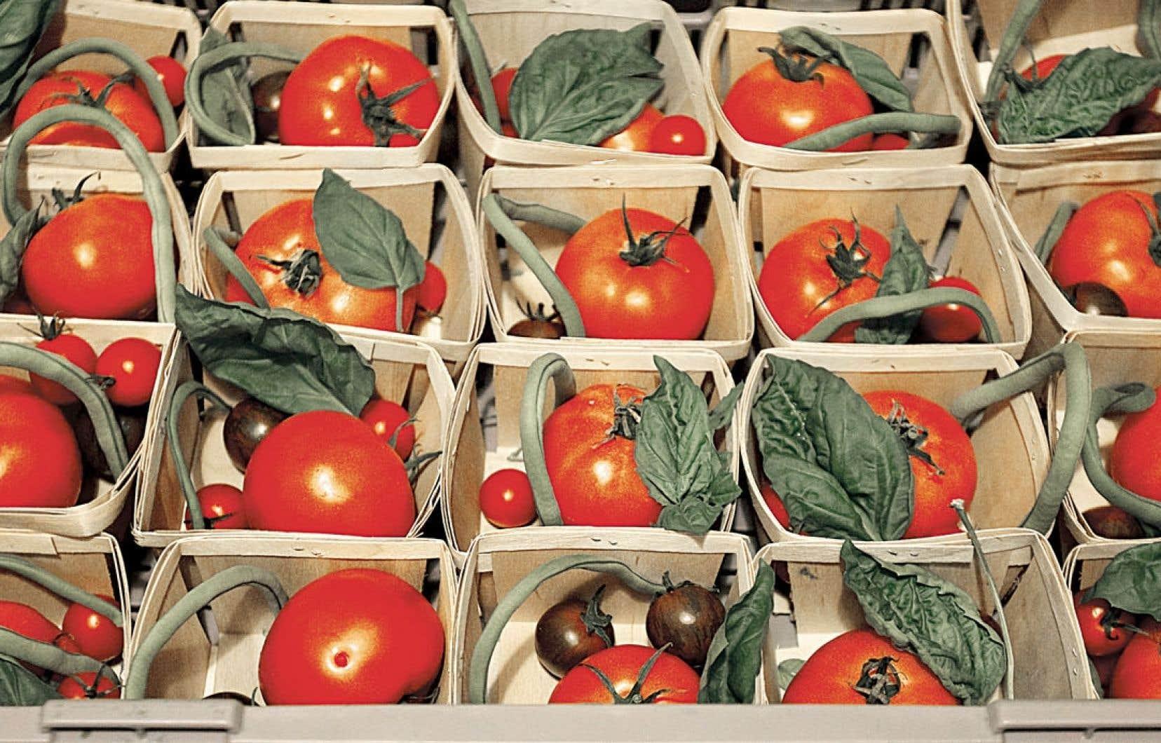 Tomates du Québec