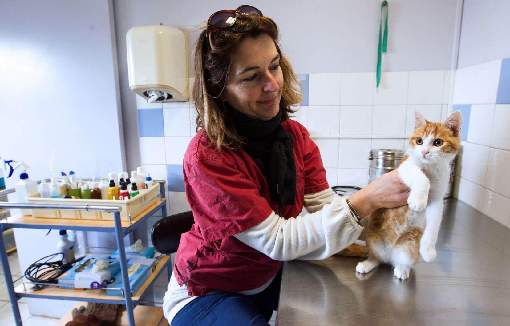 Ce petit chat prénommé Oscar a été retiré à son propriétaire français, Farid Ghilas, après que ce dernier se fut filmé en train de le lancer dans les airs. La vidéo est devenue virale, et le propriétaire s'est vu condamné à un an de prison pour cruauté animale.