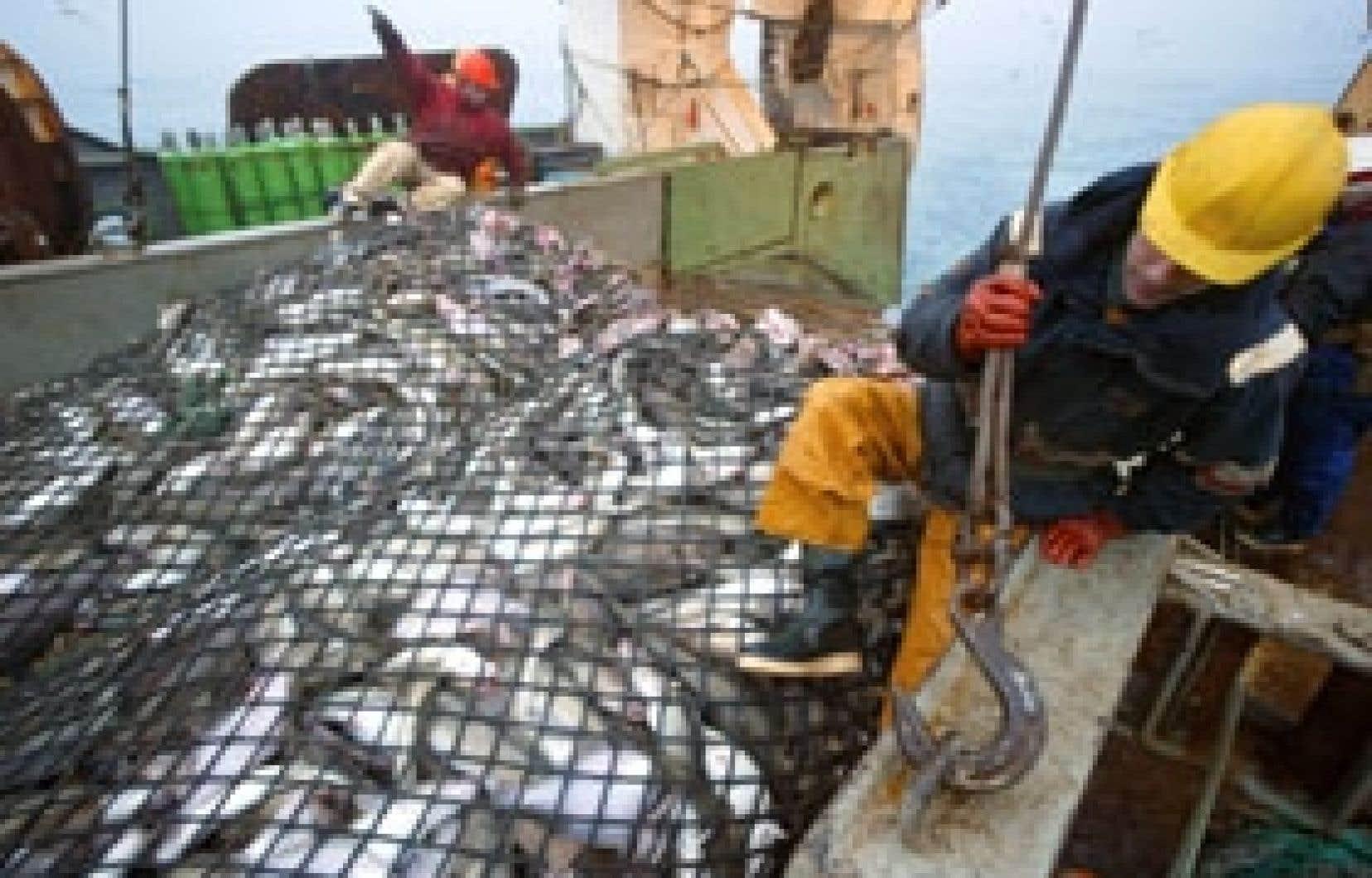 Un chalut rempli de poissons sur le morutier français Grande Hermine. Un rapport des Nations unies prévoit l'épuisement des stocks vers 2050 si le patrimoine marin n'est pas mieux protégé.