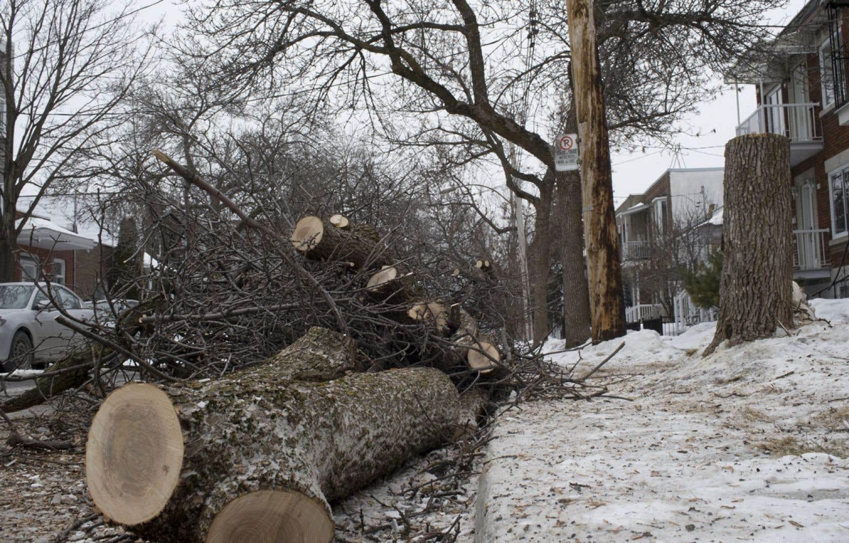 Le tiers des arbres de la métropole pourrait disparaître d'ici dix ans.