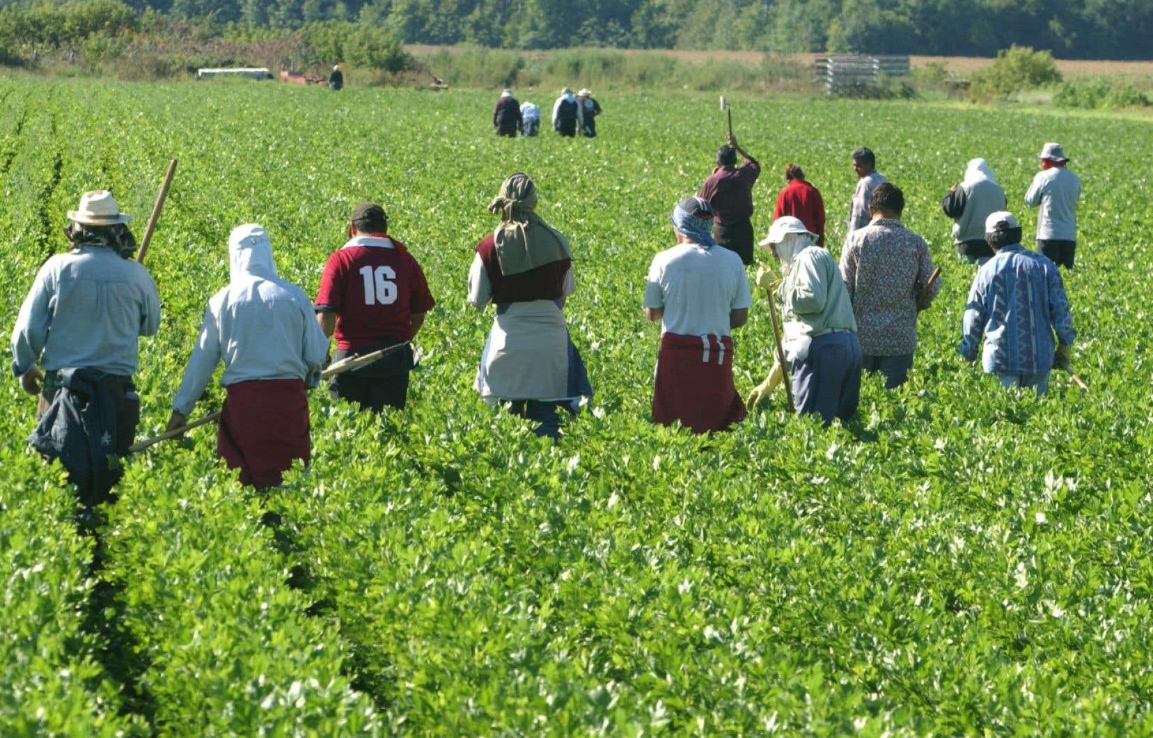 Le Canada accueille annuellement environ 28 000 travailleurs agricoles saisonniers.