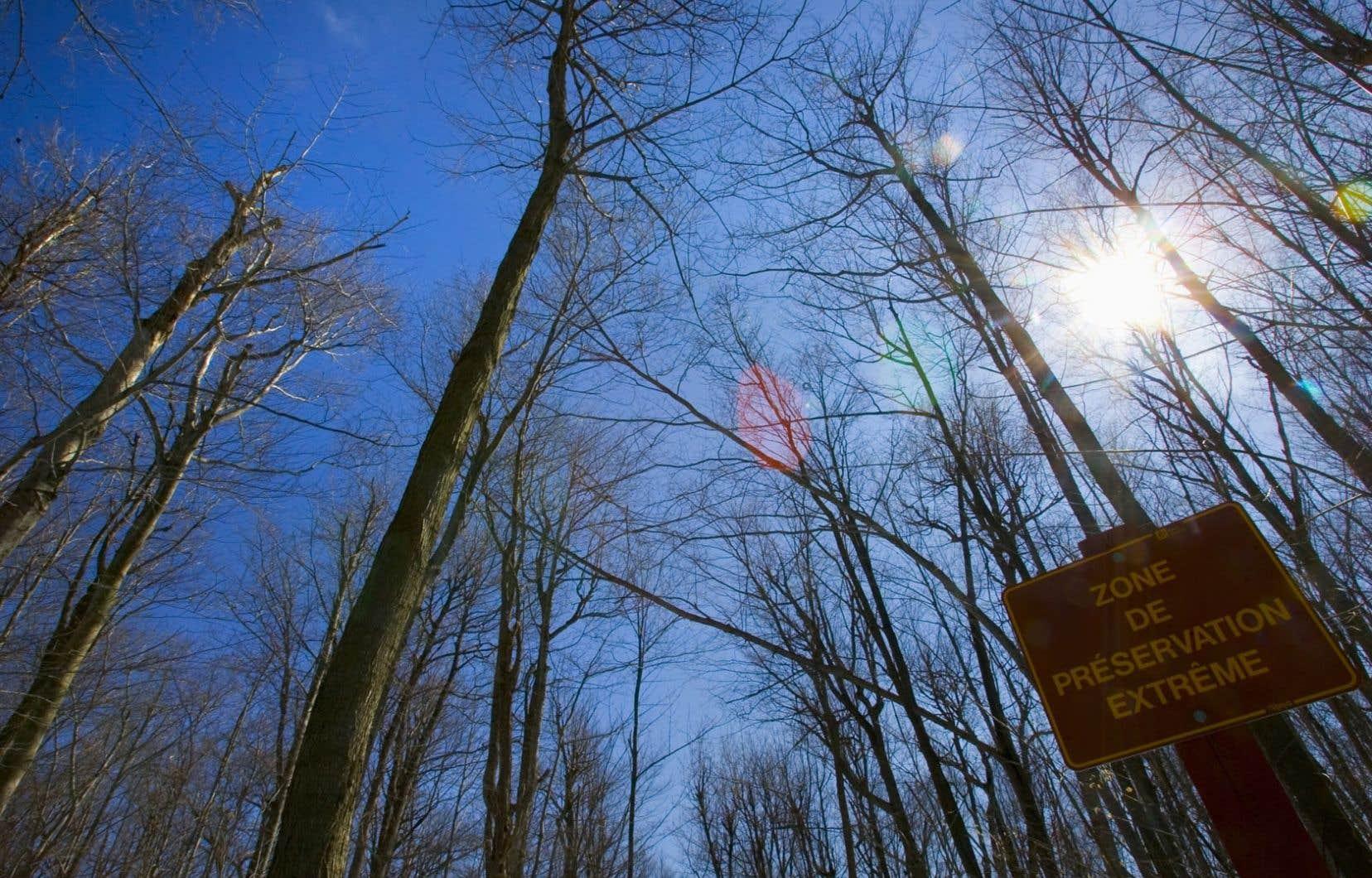 La gestion forestière, pensée sur une échelle très locale, doit s'adapter à la réalité des changements climatiques globaux.