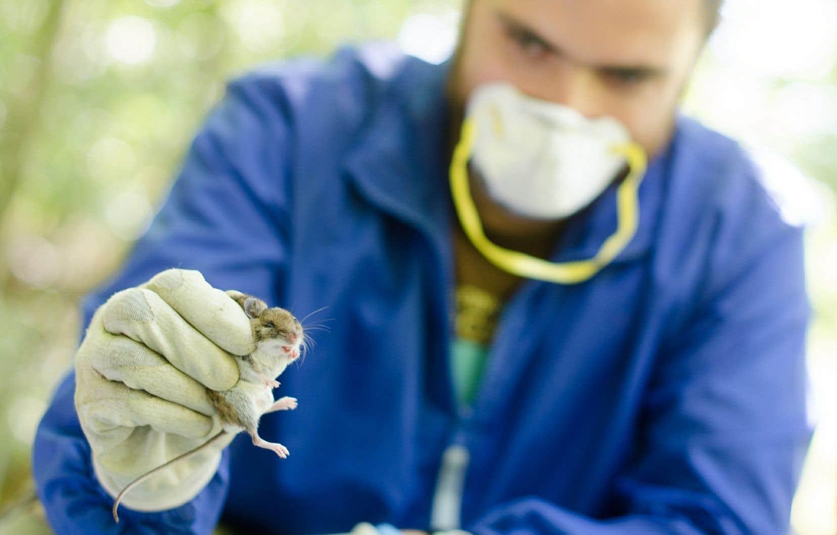 «Seuls les expérimentateurs de sexe masculin induisaient l'analgésie chez les petits mammifères.» — Jeffrey Mogil, Université McGill