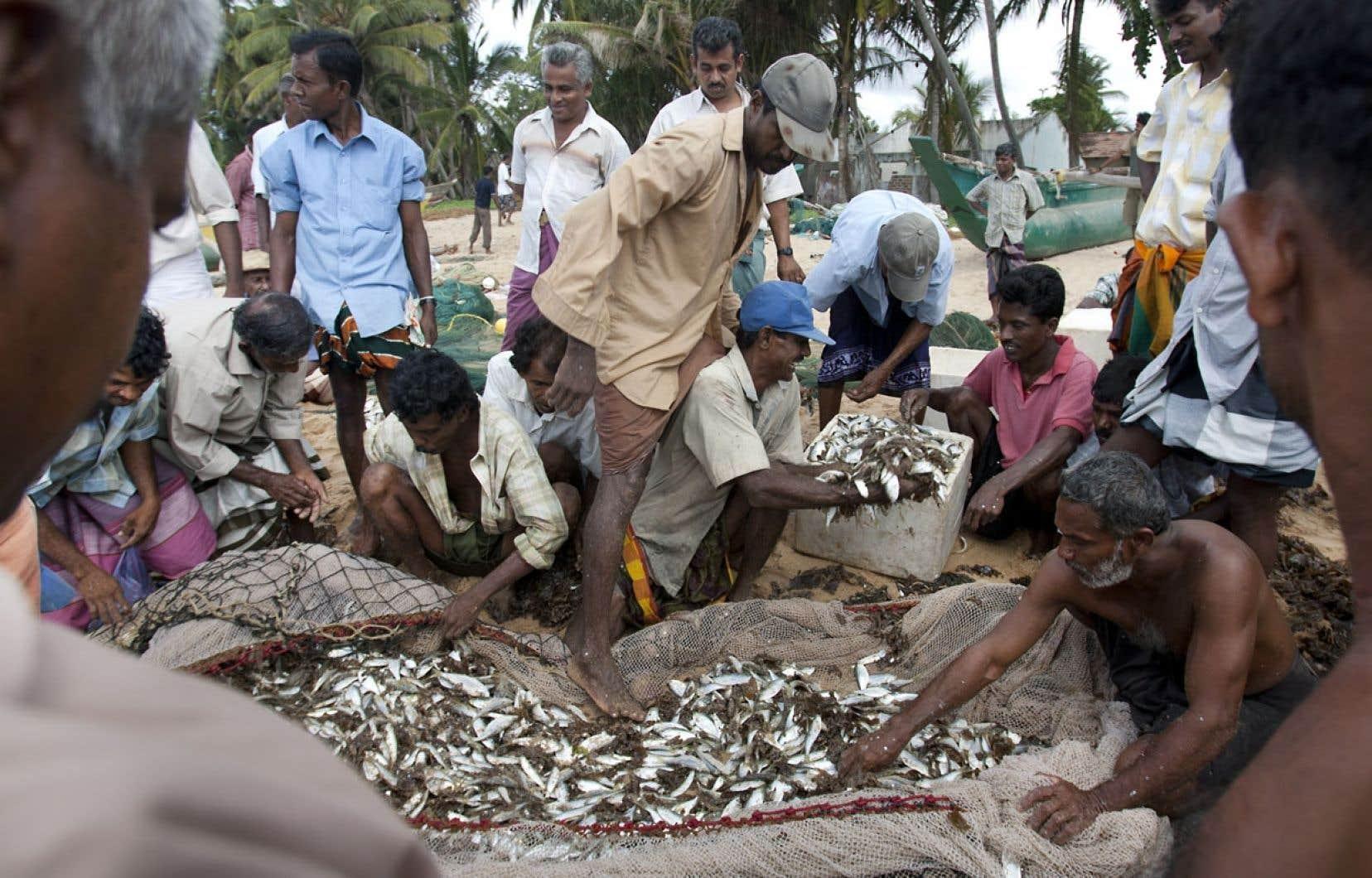 Pour préserver les ressources marines dont dépendent les peuples côtiers pour leur économie et leur alimentation, ce sont les citadins qui ont le pouvoir de changer leurs habitudes de consommation en se tournant vers des espèces moins menacées, issues d'une pêche plus responsable.