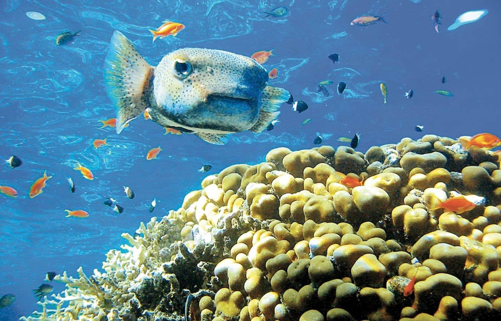 La hausse de la température globale semble inévitable. Dépasser la limite d'une hausse de 2°C serait catastrophique en matière de perte de biodiversité marine, avec tous les impacts que cela engendre.