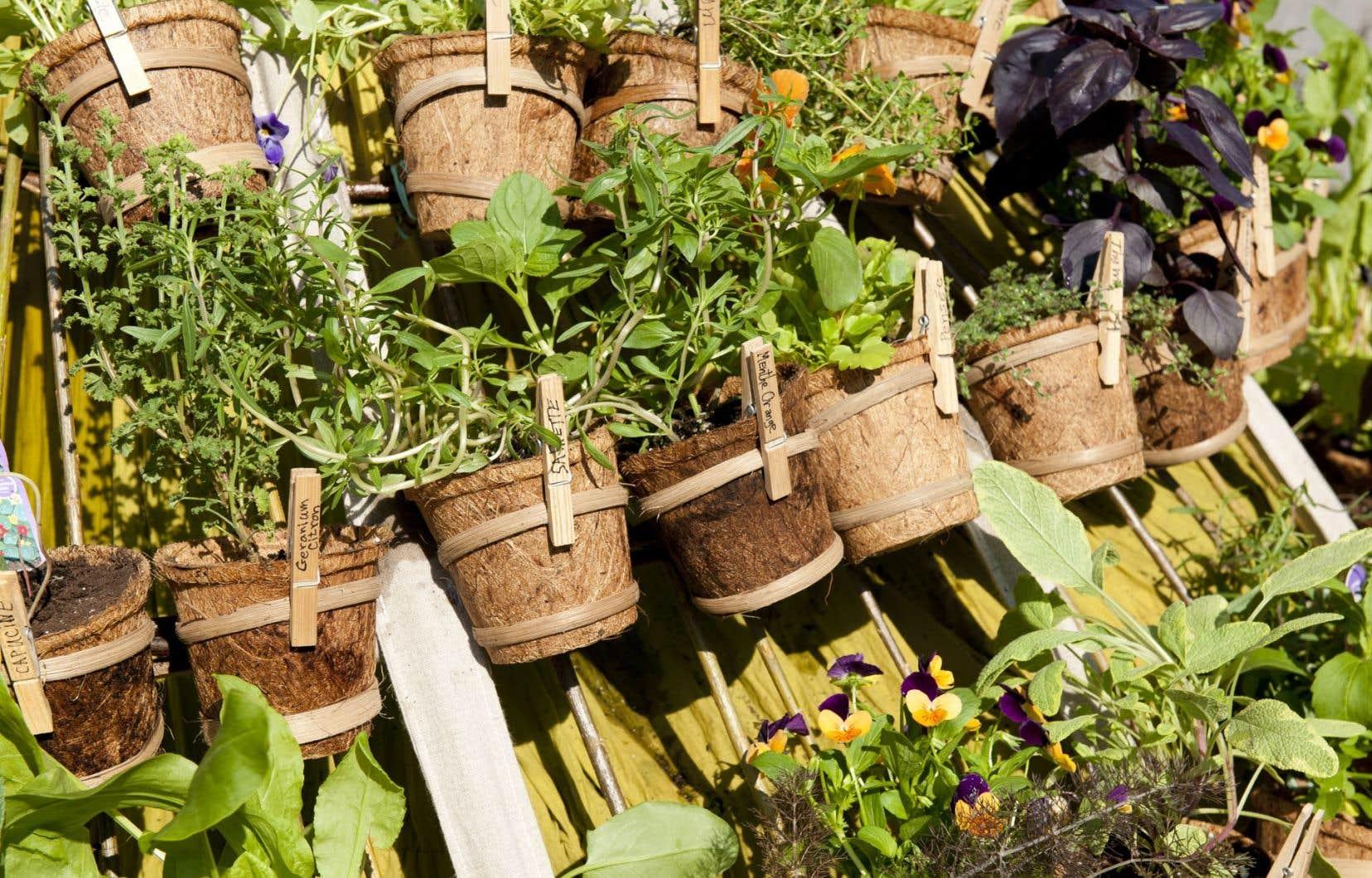 Plusieurs espèces de végétaux à retrouver ou à découvrir seront présentées au Rendez-vous horticole du Jardin botanique de Montréal.