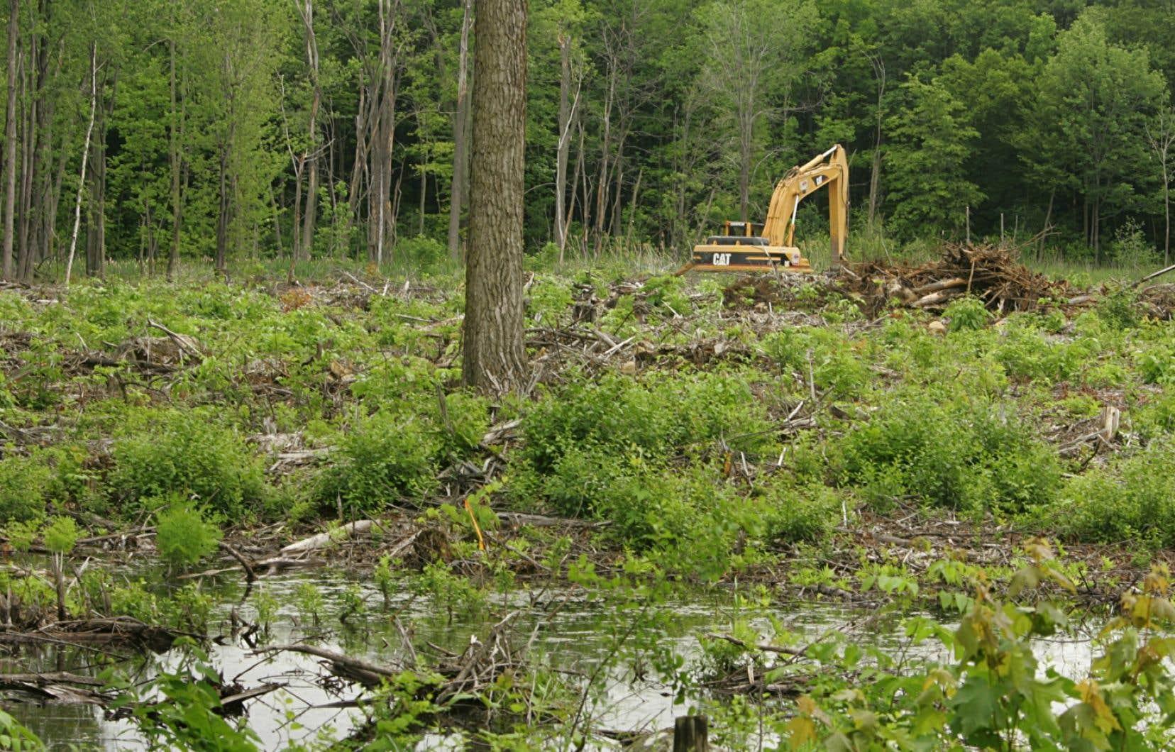 Au cours de la dernière décennie, près de 40 scieries ont fermé leurs portes, éliminant du même coup 6000 emplois. Le Nouveau-Brunswick est la province canadienne qui dépend le plus des forêts sur le plan du produit intérieur brut.