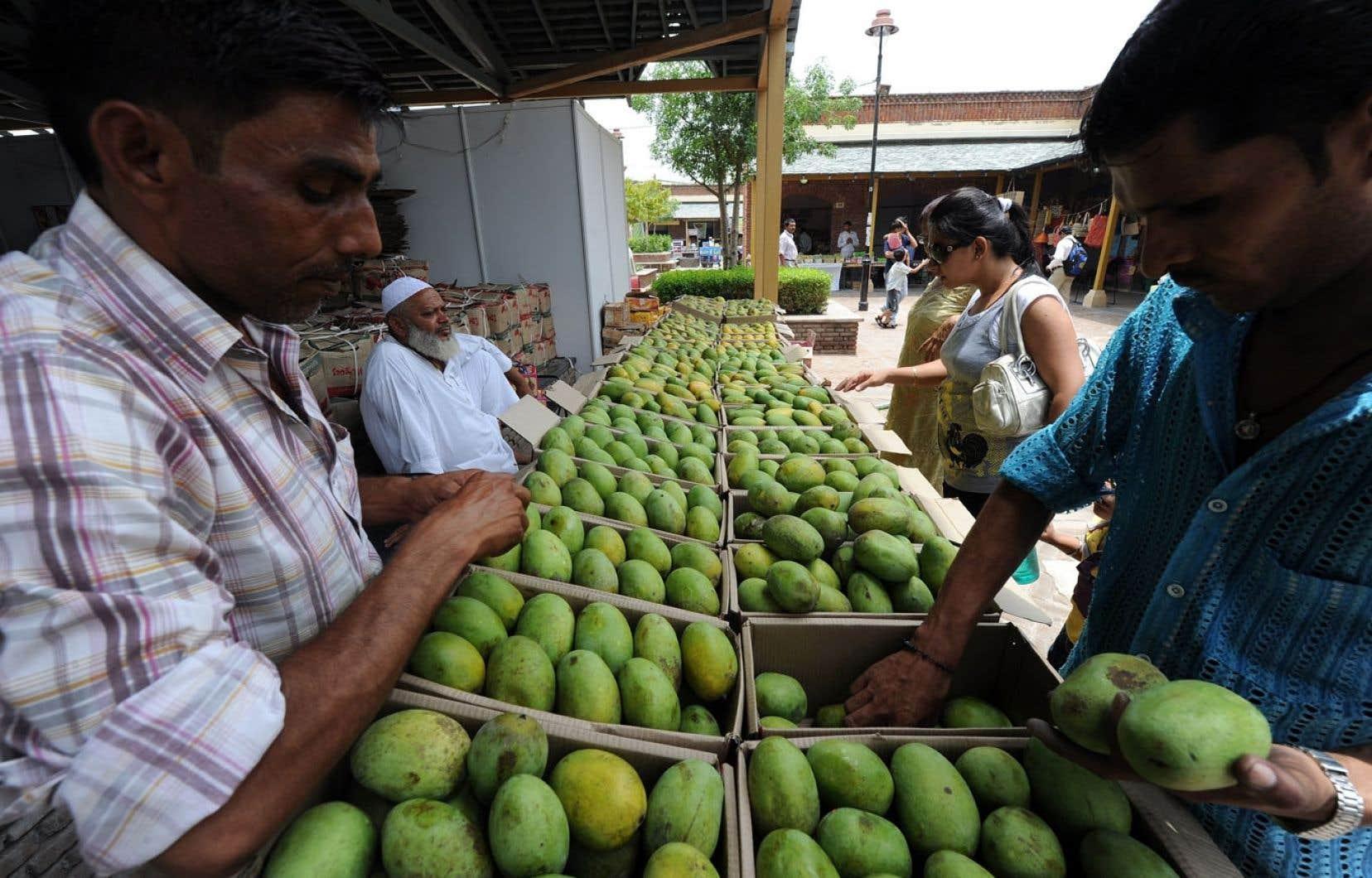 Des variétés de mangues sur des étals à New Delhi, en Inde, où elles sont utilisées à toutes les sauces.