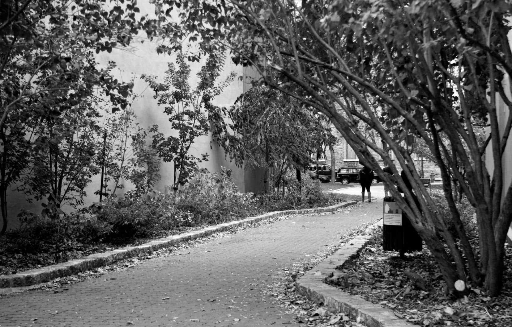 Loin du tumulte de la grande Sainte-Catherine, il existe des détours plus tranquilles dans le Village comme la rue Sainte-Rose, véritable morceau de campagne au coeur de la ville.