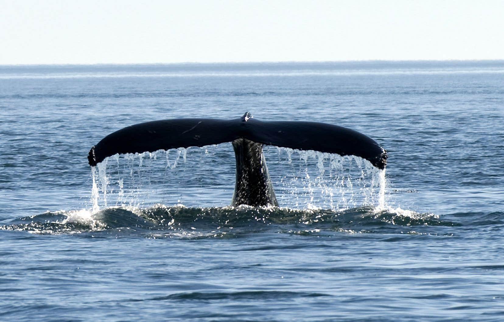 Cette nouvelle menace pour les milieux marins se manifeste partout sur la planète.