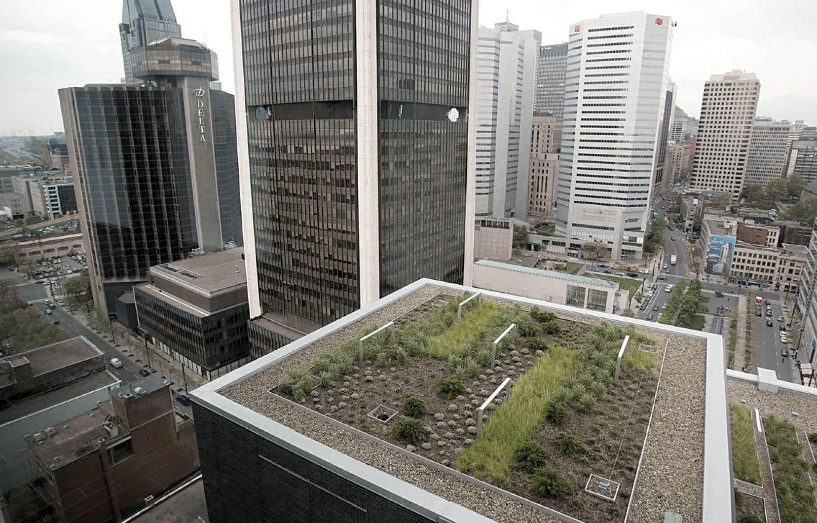 Alors que le gouvernement incite les citoyens à construire des toits verts, dans les faits, le Code national du bâtiment ne les permet actuellement pas. Pour les grands projets, la procédure de dérogation est longue et exigeante. Ci-dessus, une toiture montréalaise.