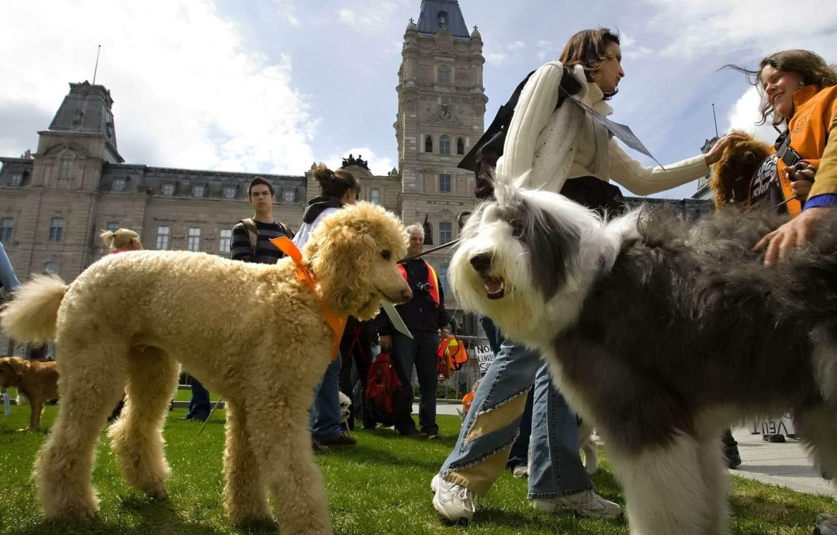 La reconnaissance légale de la sensibilité animale ne confère pas des «droits» aux animaux, mais aura pour effet d'accroître les obligations des propriétaires et des éleveurs envers les bêtes.<br />