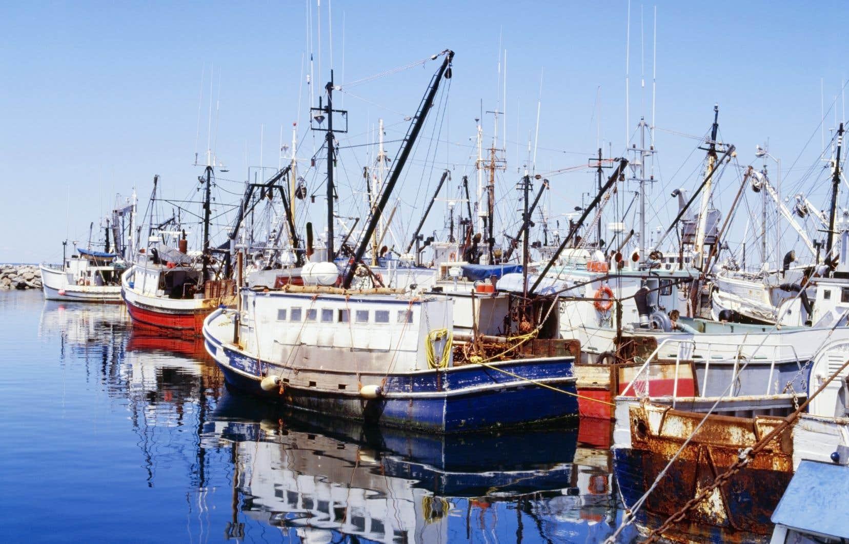 Plusieurs associations de pêcheurs des Maritimes demandent à Ottawa de rendre des comptes quant à la présence d'un bateau-congélateur appartenant à Ocean Choice International.