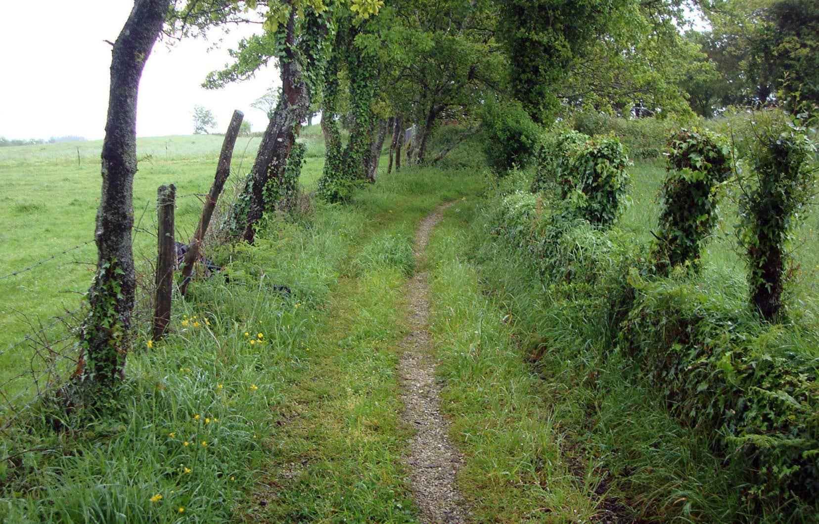 France Boisvert propose d'explorer un chemin poétique dans Vers Compostelle, aux Heures bleues.