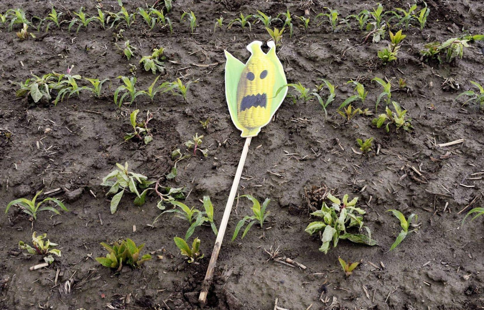 Les producteurs doivent-ils réclamer un assouplissement de la norme biologique pour permettre une faible présence d'OGM ou poursuivre malgré tout leur quête de pureté ?