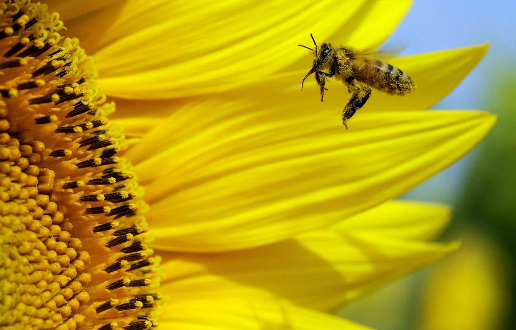 L'effondrement des colonies d'abeilles à travers le monde a suscité de nombreuses recherches.