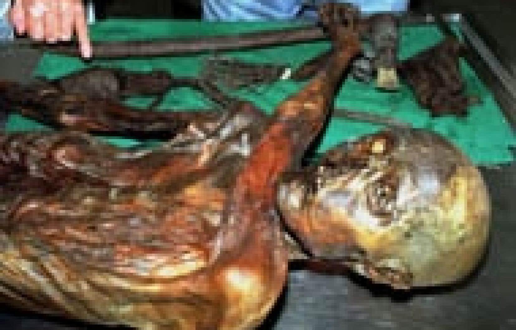 La momie, familièrement baptisée «Ötzi» à cause des montagnes de l'Ötzal, a près de 5300 ans, selon la datation au carbone 14.