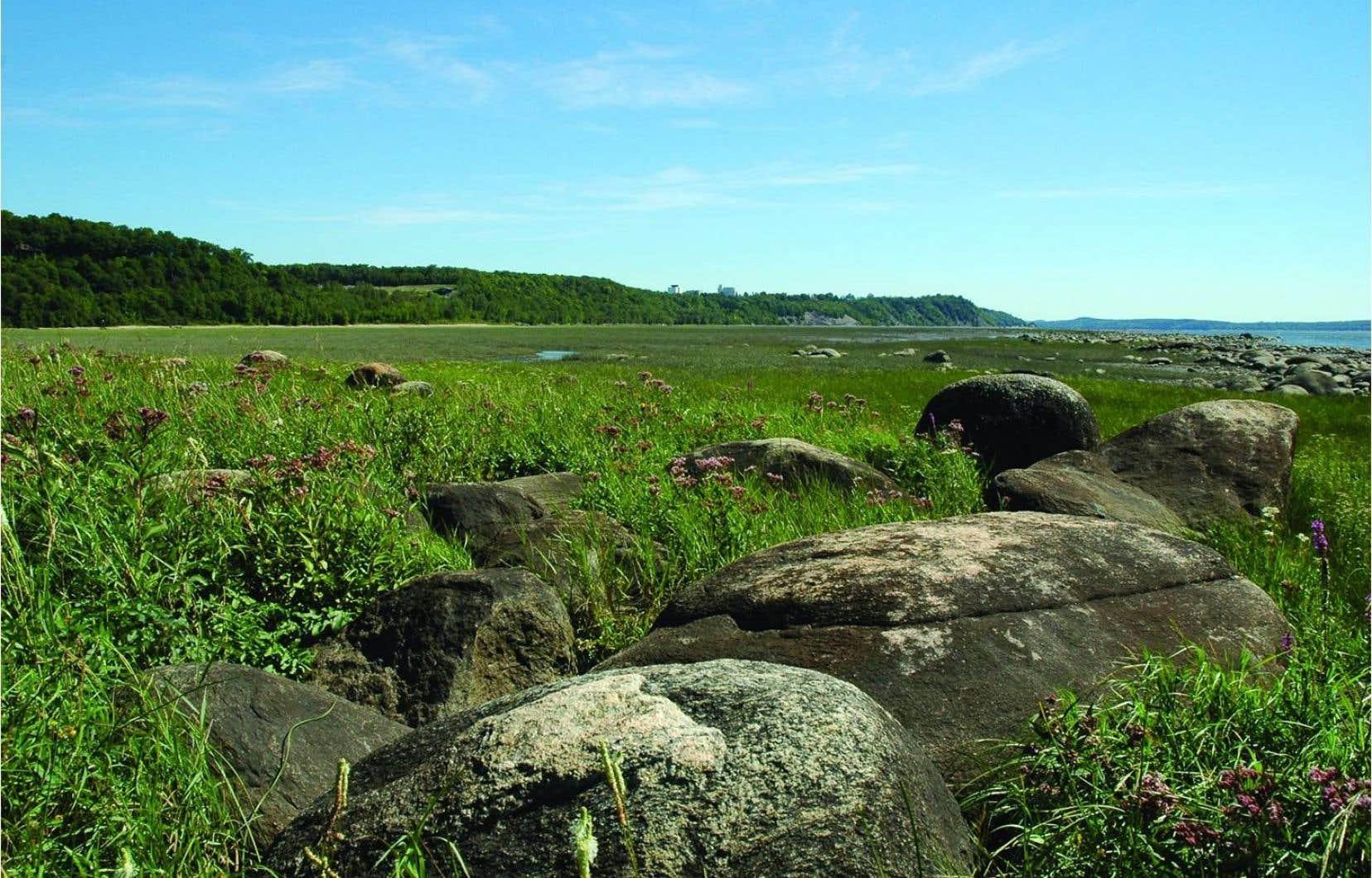 La réserve naturelle des battures de Saint-Augustin-de-Desmaures compte des marais et des herbiers s'étendant sur plusieurs kilomètres en bordure du fleuve, de Cap-Rouge à Neuville.