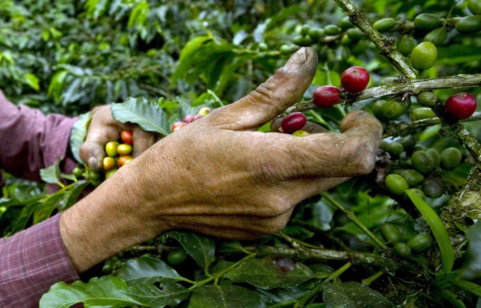 Selon Gérald Larose, on est en train de révolutionner un peu les rapports Nord-Sud avec des échanges internationaux dans le domaine du café et des fleurs, entre autres.