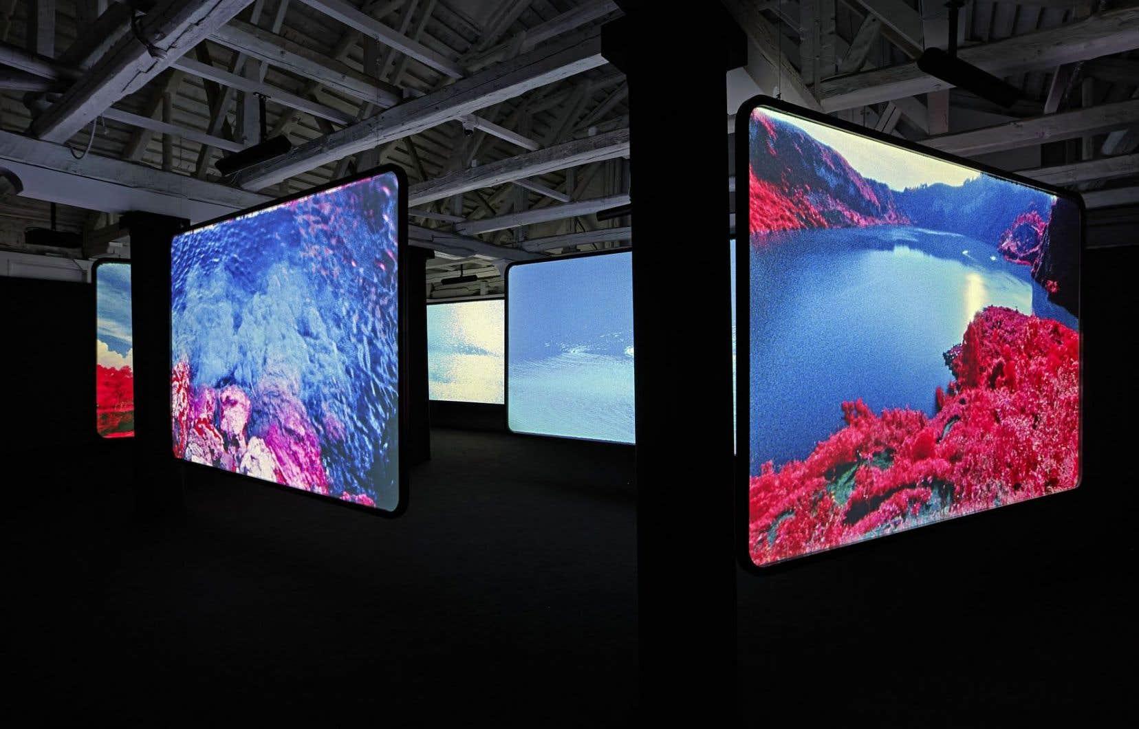 Richard Mosse, The Enclave, 2013. Vue de l'exposition. Installation vidéo à six écrans, film couleur infrarouge transféré en vidéo HD.