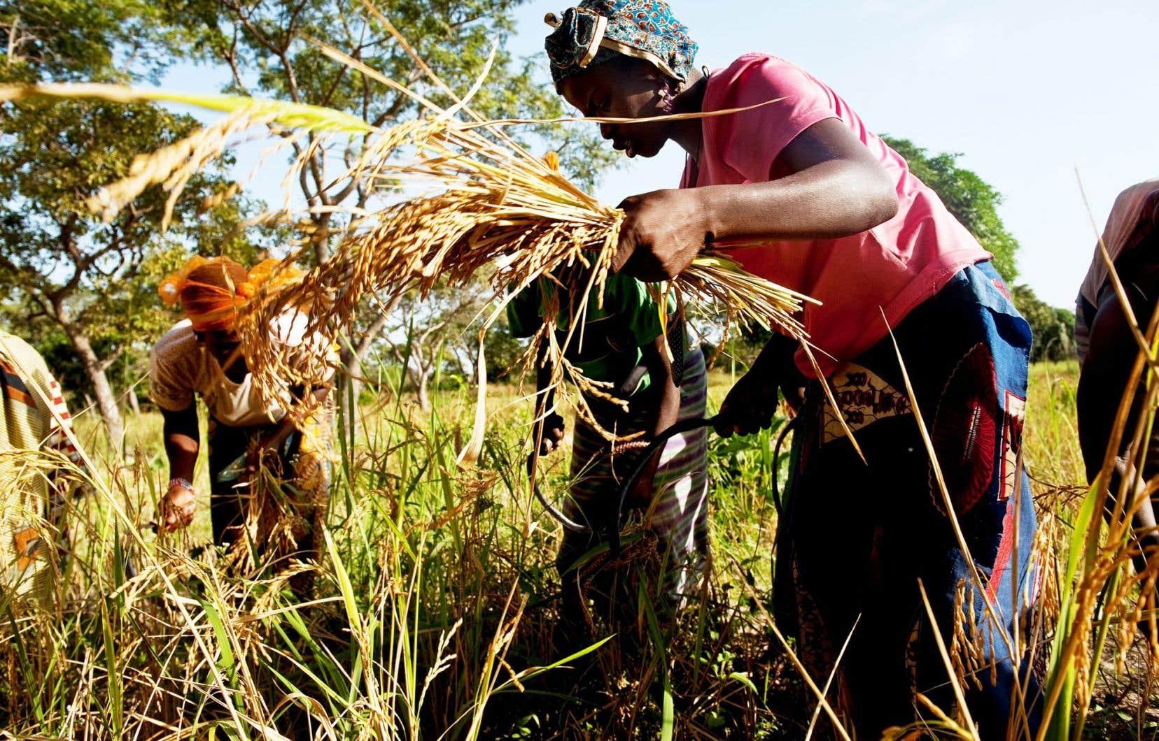 Une consultation élargie tenue en 2012-2013 par l'Observatoire jeunesse Oxfam-Québec auprès des jeunes coopérants québécois dénote que ceux-ci jettent un regard assez critique sur la coopération dans ses formes actuelles.