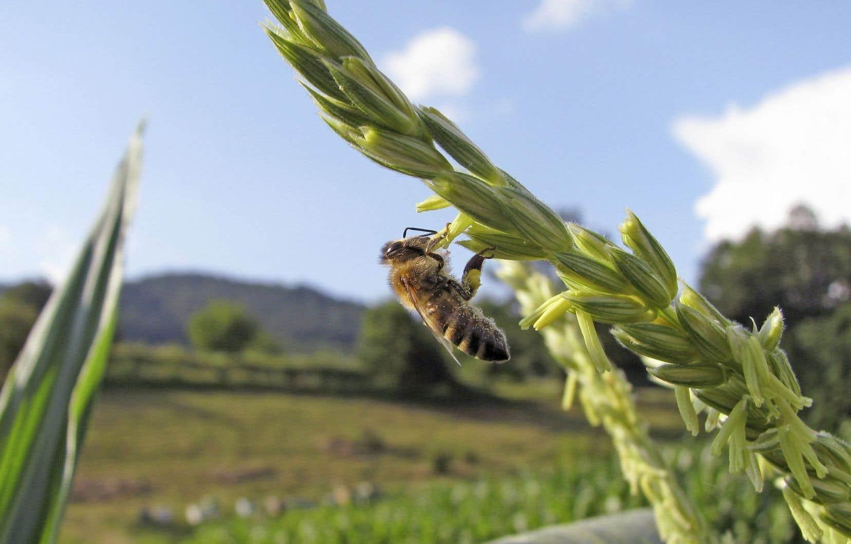 Ces pesticides menaceraient non seulement les abeilles, les papillons et autres pollinisateurs, mais aussi « la diversité et la stabilité de l'écosystème ».