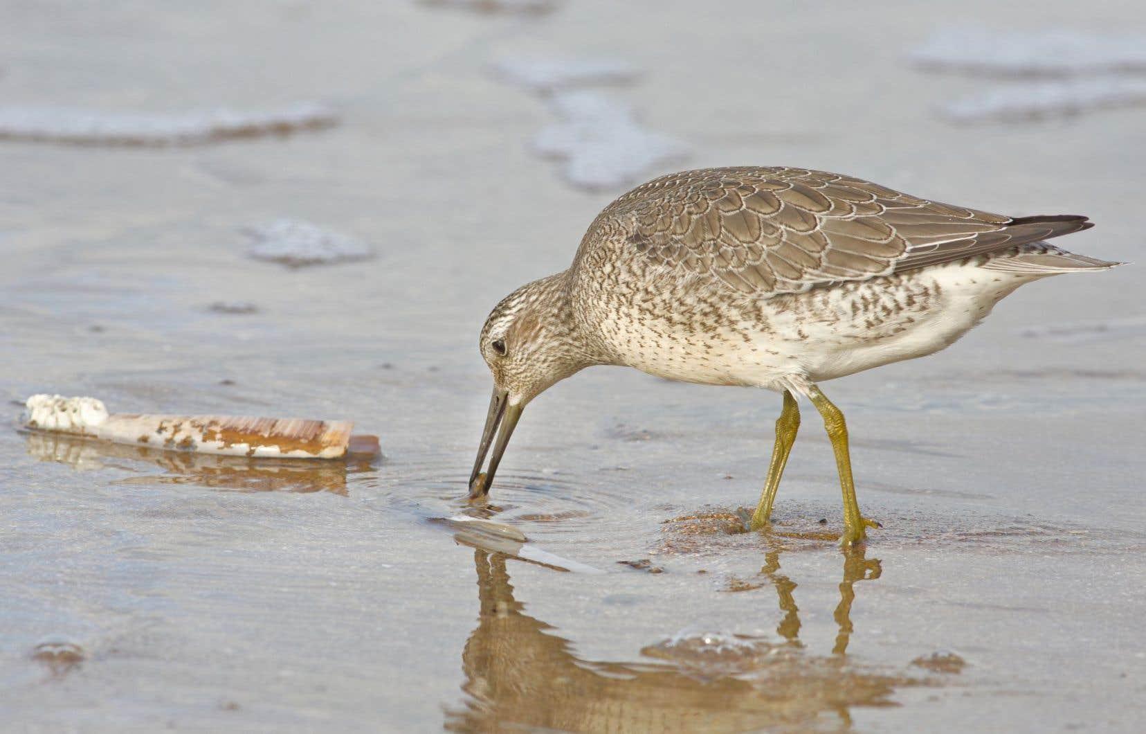 Plus de 18 000 oiseaux nichent au printemps sur des îles situées à moins de 15 km du site prévu pour le port d'exportation pétrolière.
