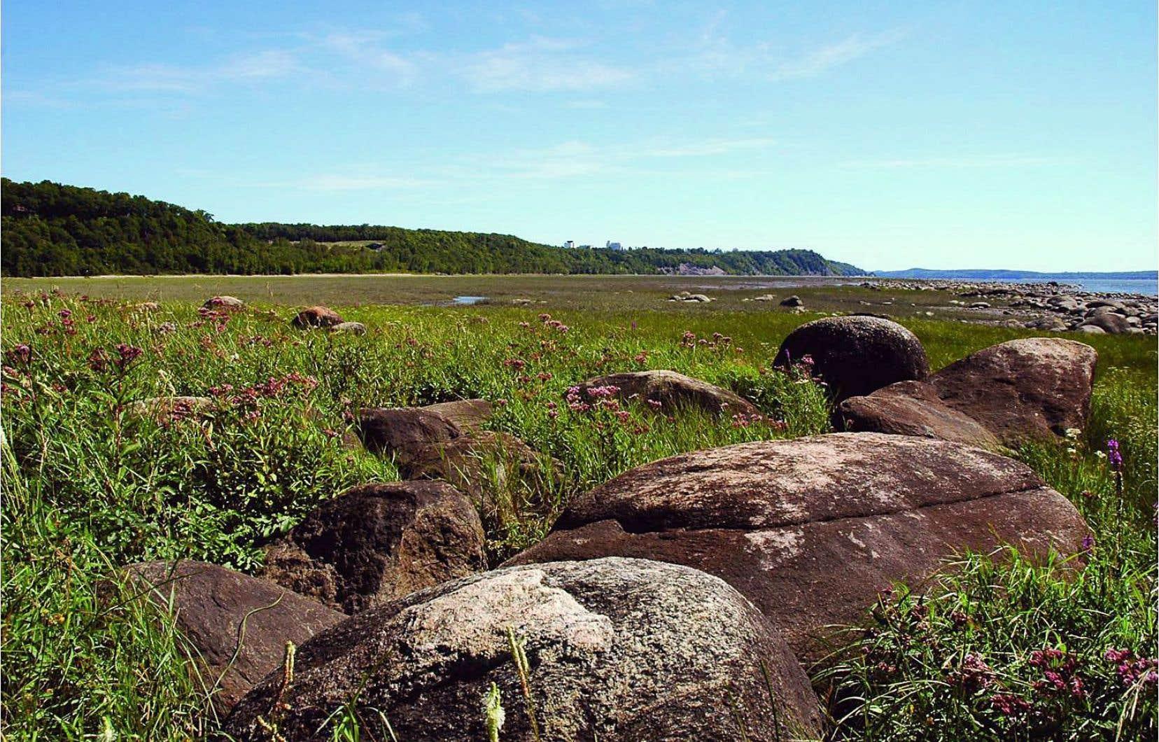 Le pipeline doit passer par la réserve naturelle des battures de Saint-Augustin-de-Desmaures, une zone abritant une biodiversité unique au monde.