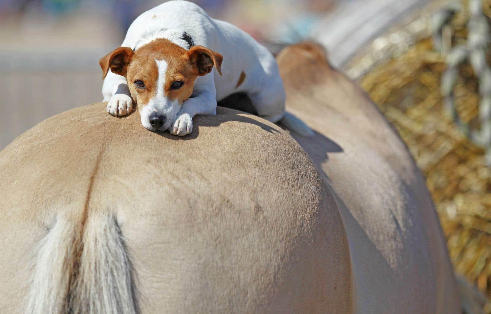 La domestication du cheval mobiliserait quelque 125 gènes expliquant les adaptations physiologiques et cognitives survenues chez l'équidé au fil des siècles.