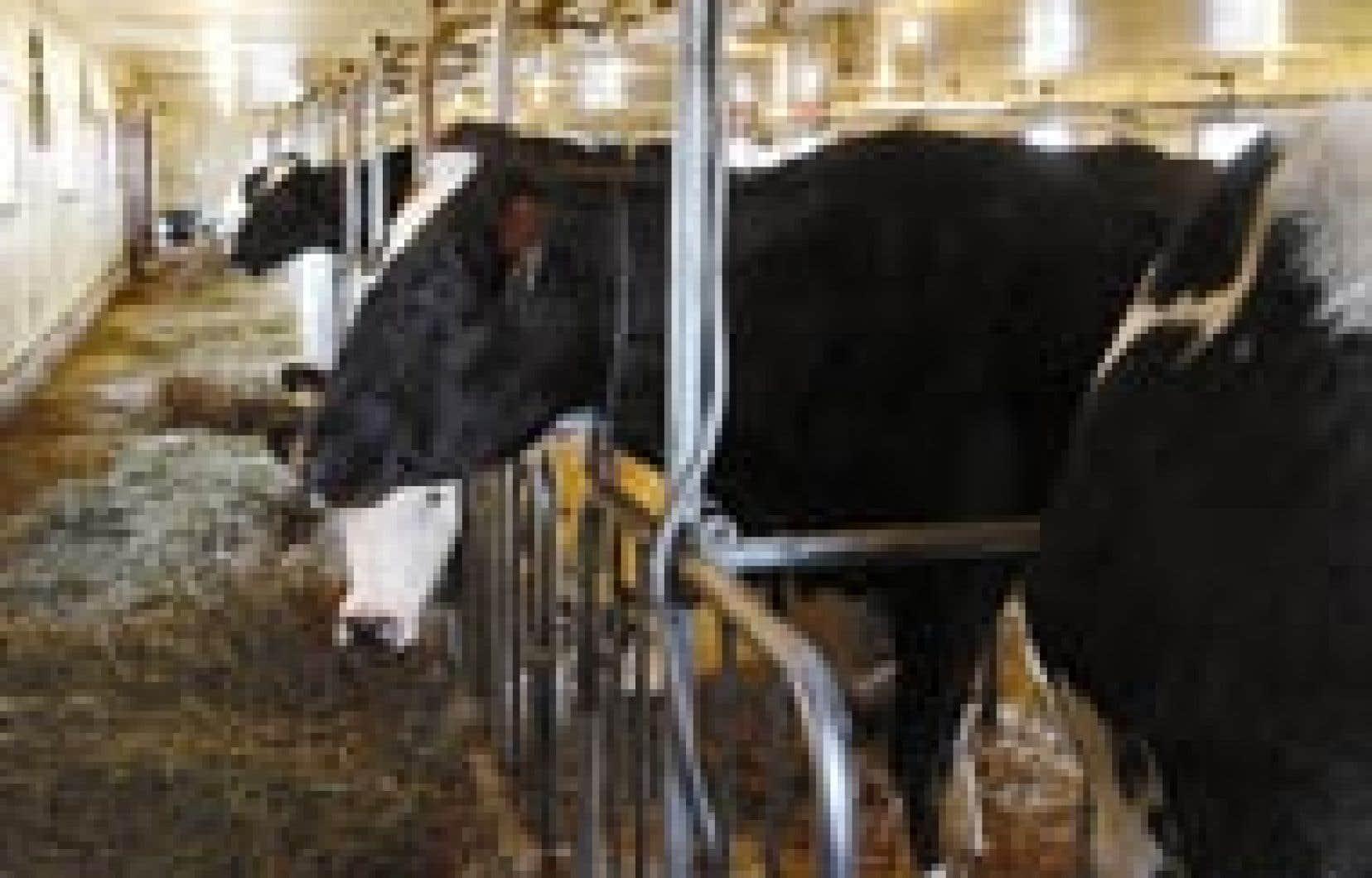En décembre 2002, l'Organisation mondiale du commerce (OMC) obligeait le Canada à réduire de moitié son exportation laitière, affirmant que les producteurs canadiens sont subventionnés par le gouvernement.