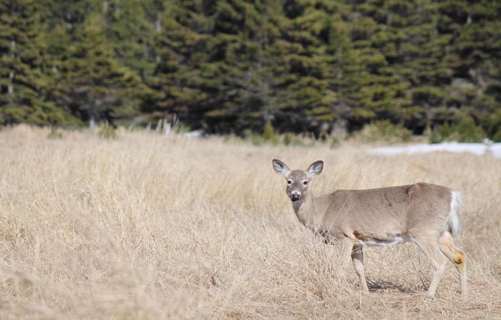 Il reste plusieurs forages à mener cette année sur la plus grande île du Québec.