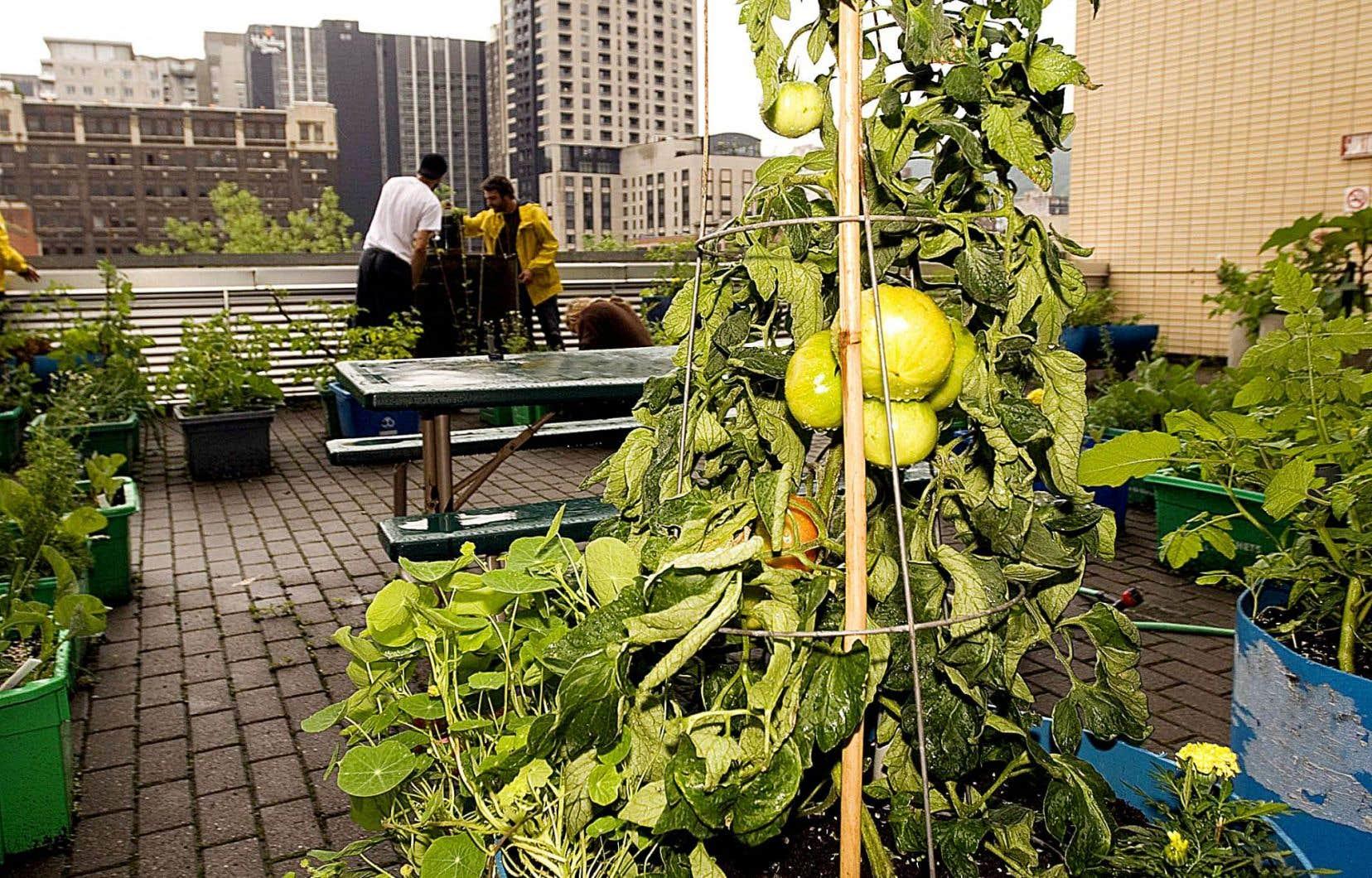 La tradition des jardins communautaires ne date pas d'hier à Montréal.