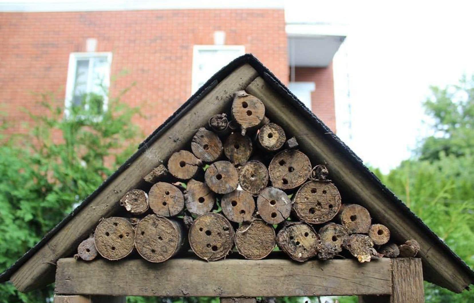 Le «multiplex» à bestioles de Ruelles Biodiverses vise à attirer des insectes utiles à la pollinisation de diverses plantes.