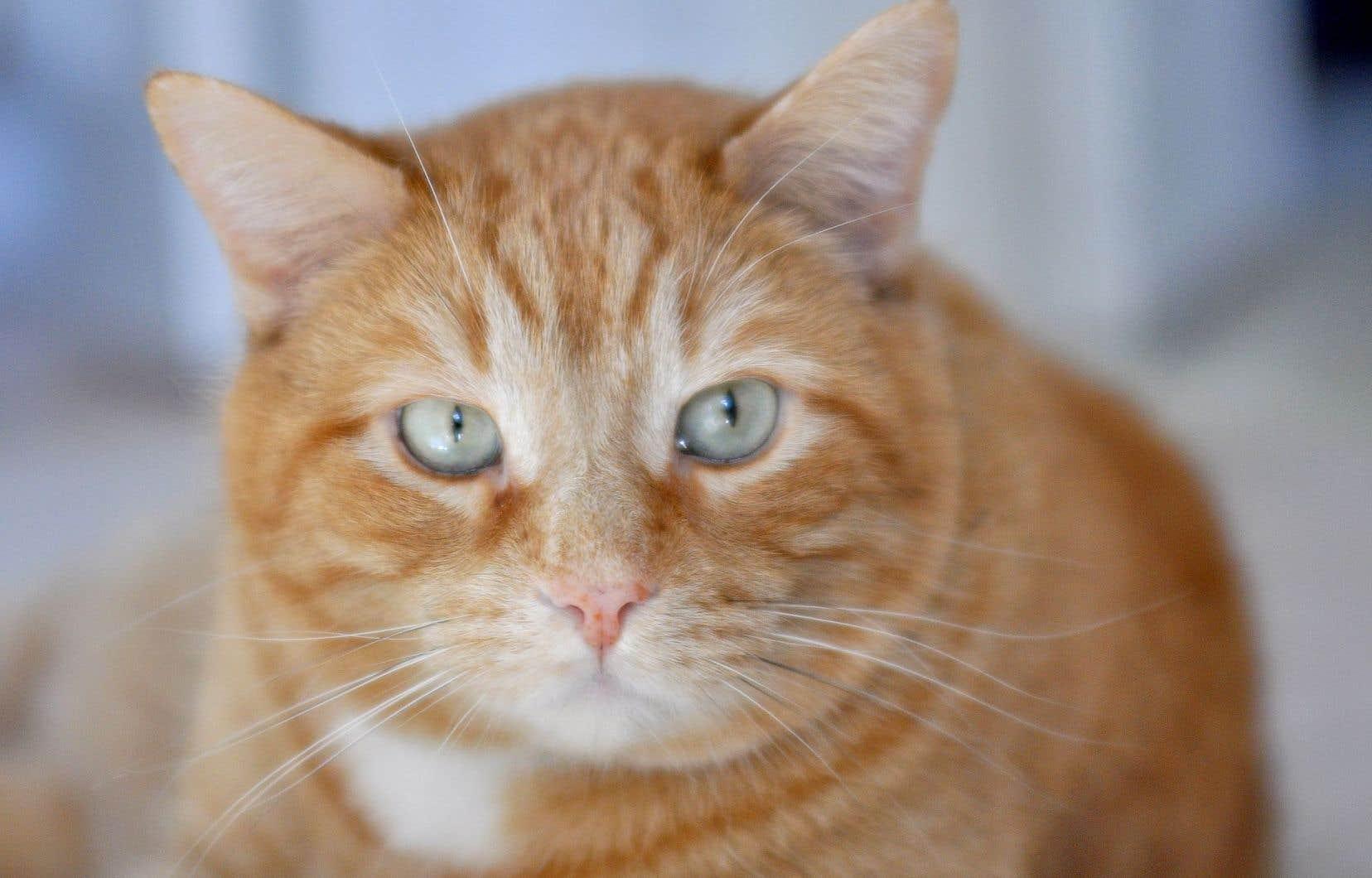 Le projet de loi, déposé vendredi par le ministre Pierre Paradis, interdira à toute personne de causer de la détresse à un animal.