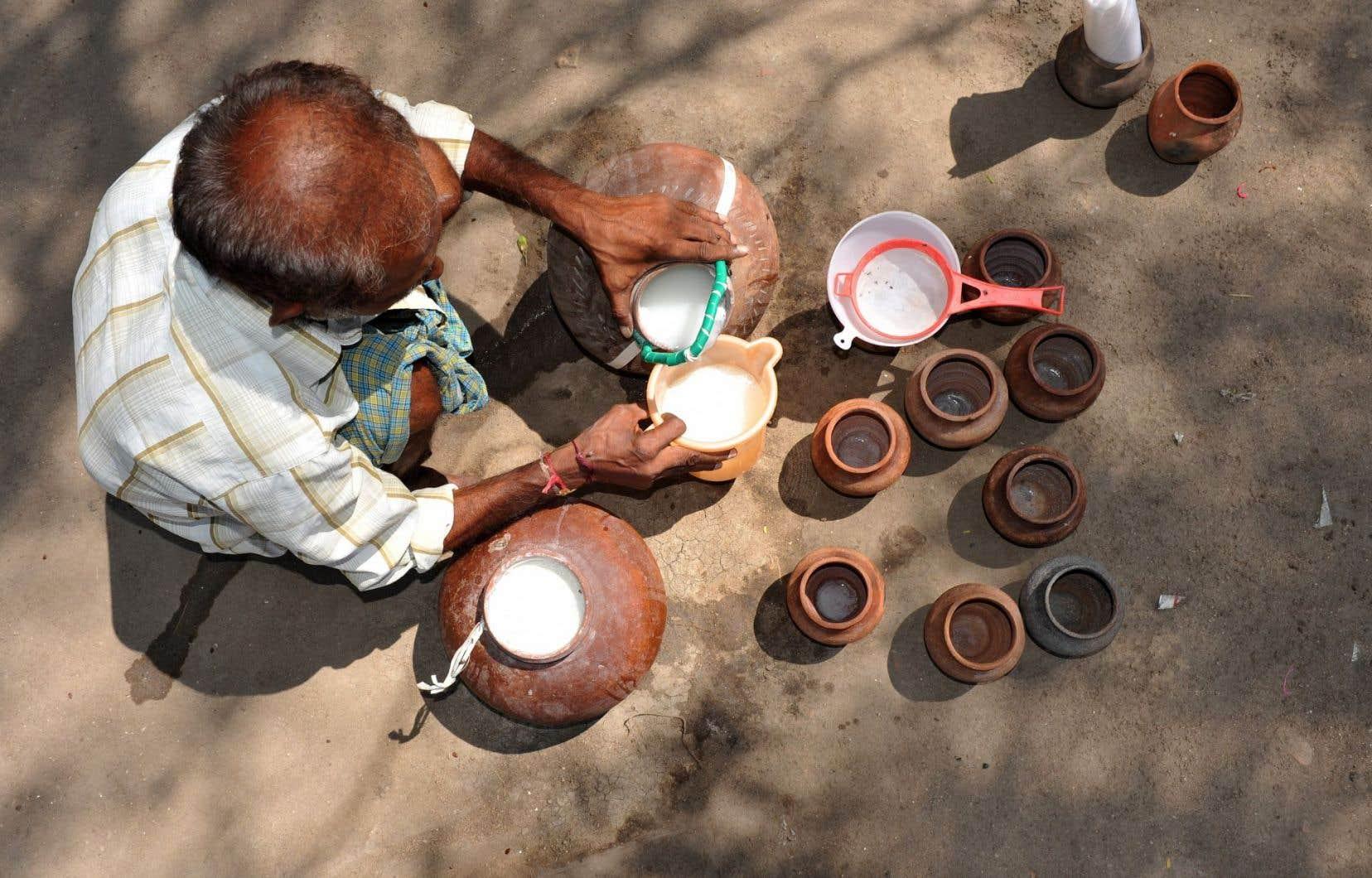 Un homme préparant le vin de palme, breuvage dont se délectentles chimpanzés de Bossou, en Guinée.