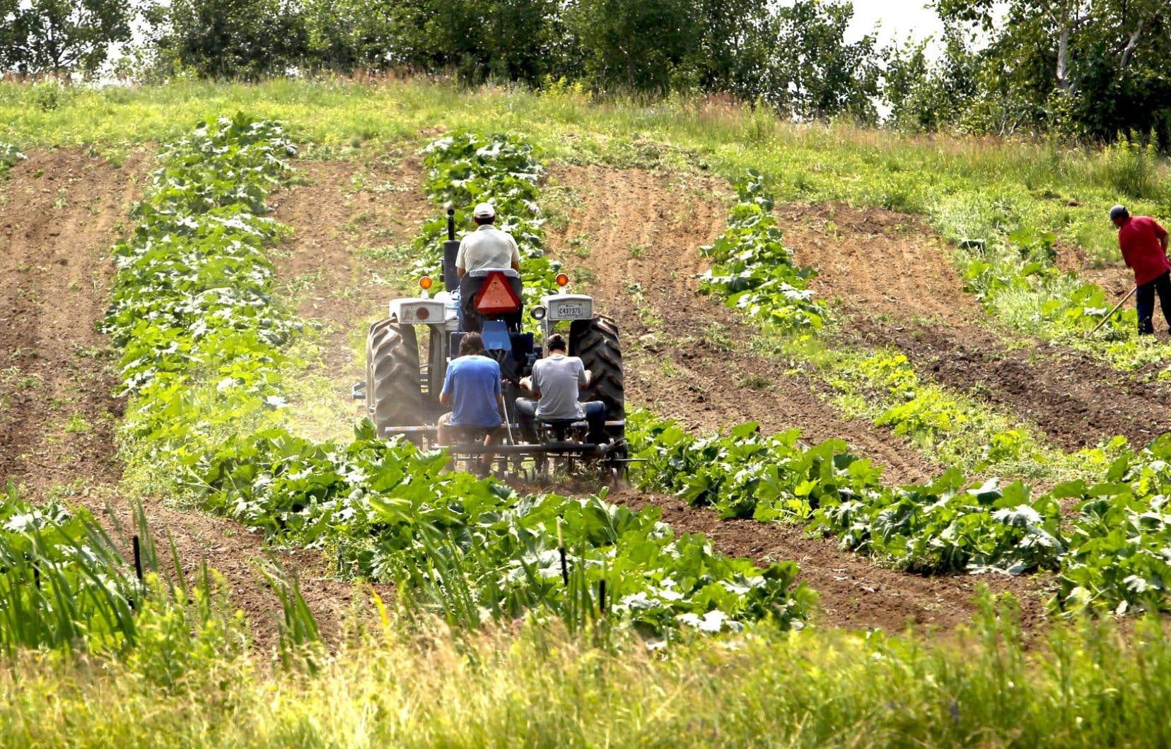 La finance a pris le contrôle de l'agriculture, provoquant la disparition lente des fermes familiales.