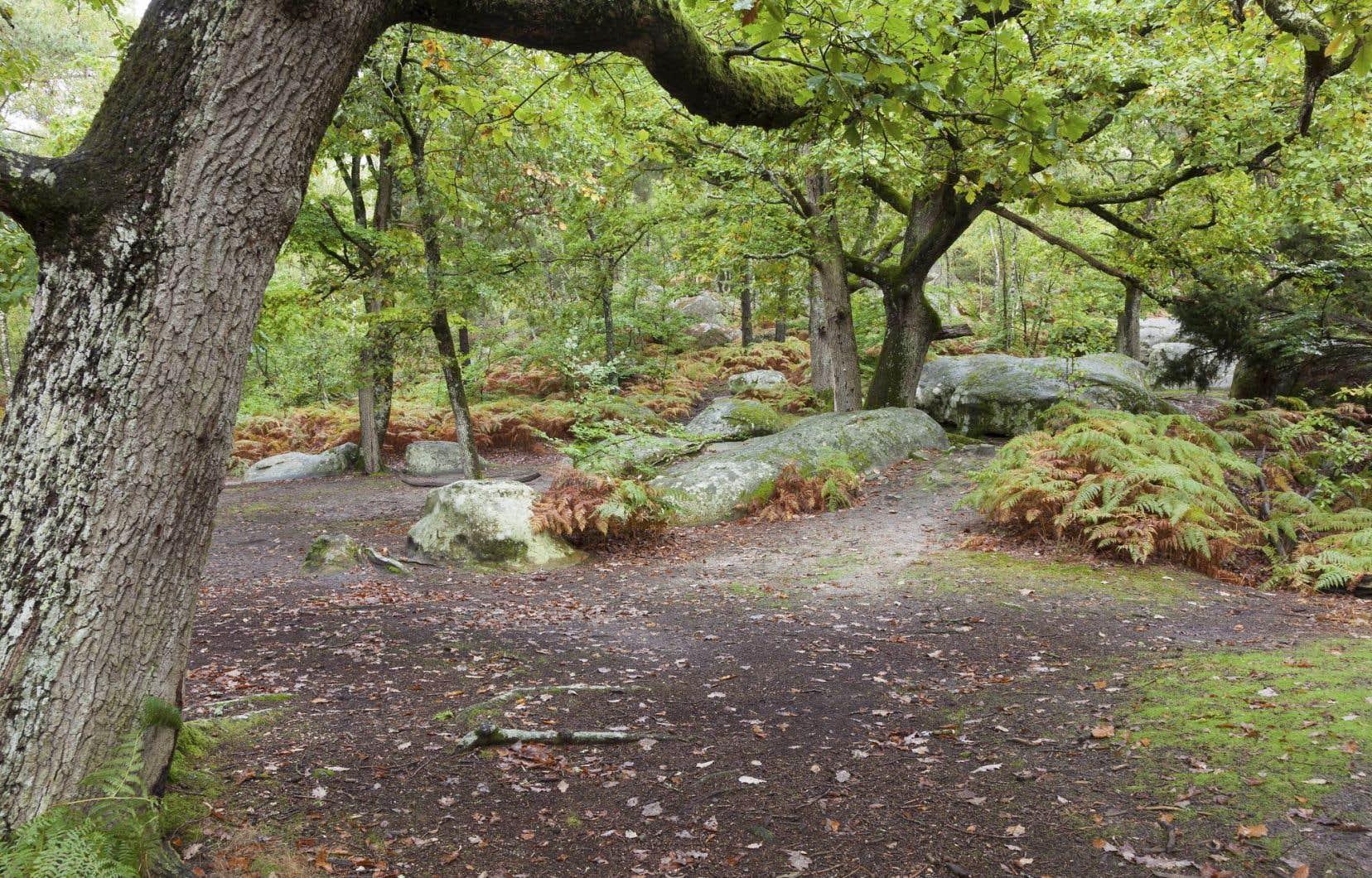 La bucolique forêt de Fontainebleau est le rendez-vous tout indiqué pour rencontrer des sangliers.